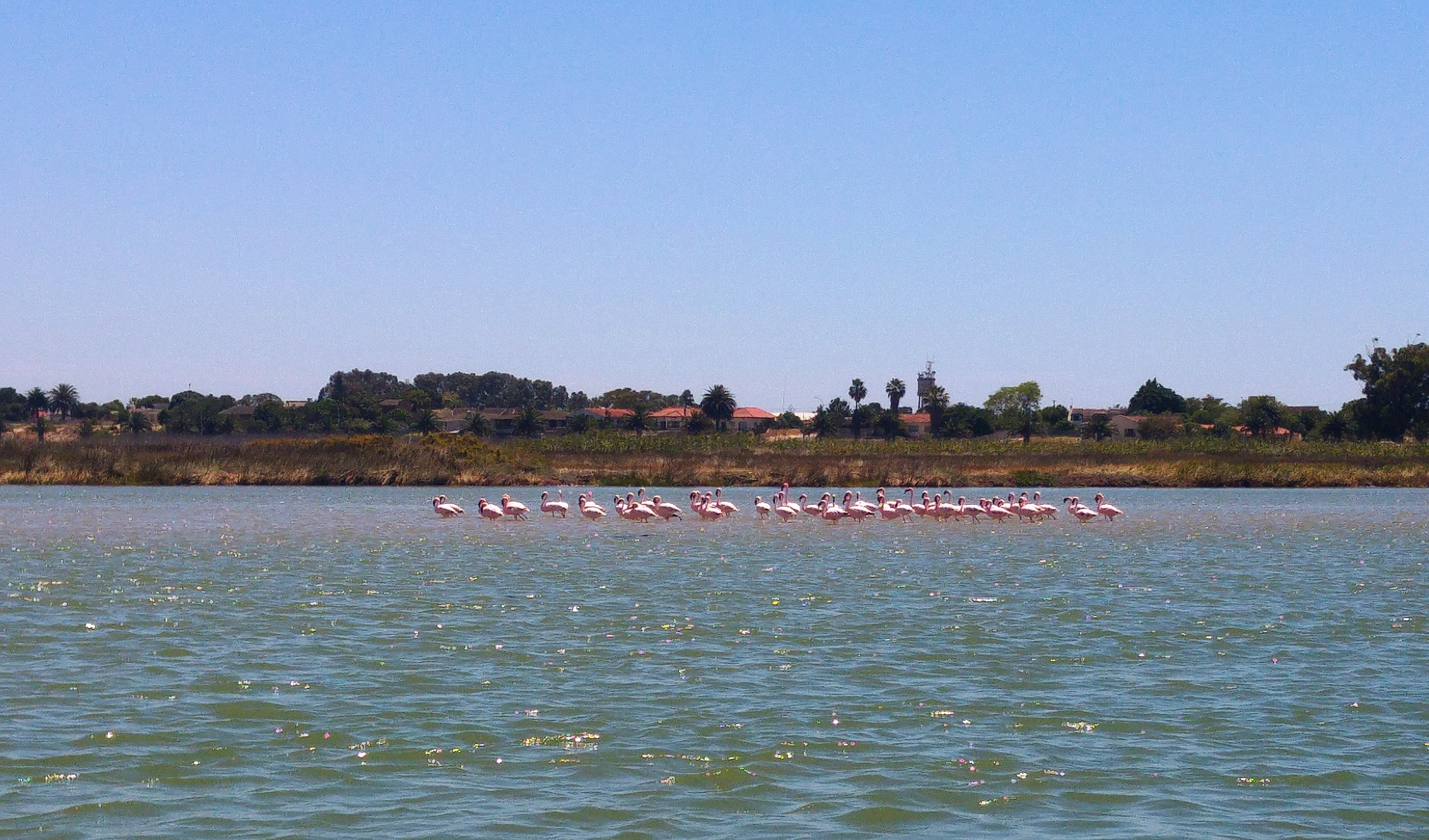 Flamingoes 11 Nov 2016_reduced